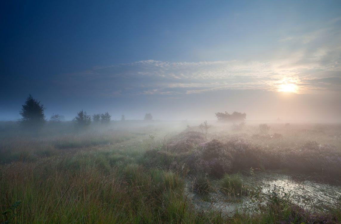 Фото бесплатно синее, небо, природа, пейзаж, солнце, болото, трава, туман, пейзажи