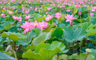 Фото бесплатно цветочный бутон розового цвета, розовый цвет, много