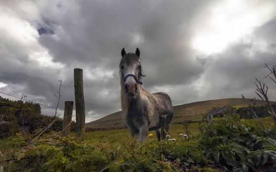 Фото бесплатно лошадь, вид спереди, ограждение