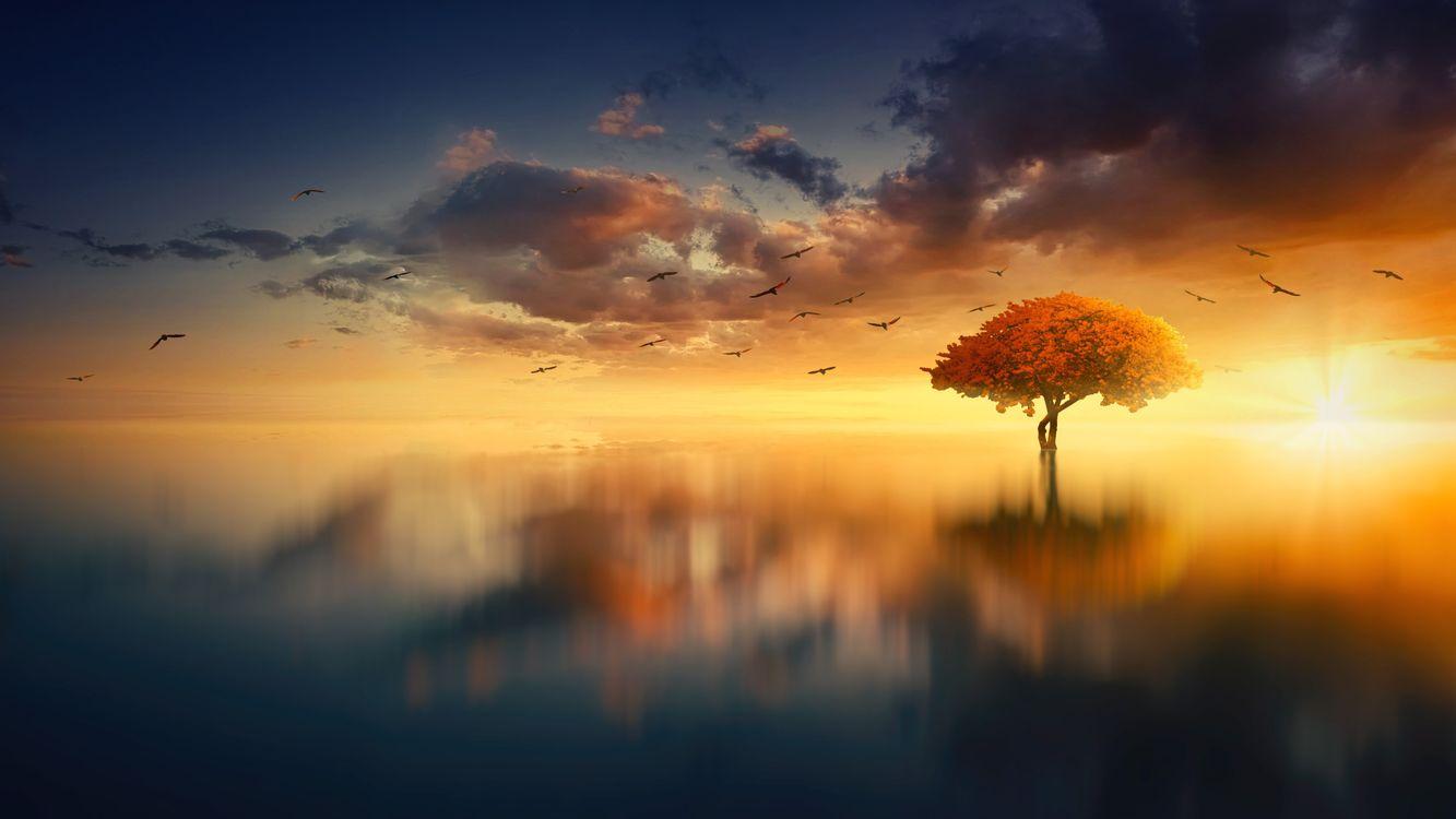 Фото бесплатно одинокое дерево, горизонт, закат - на рабочий стол
