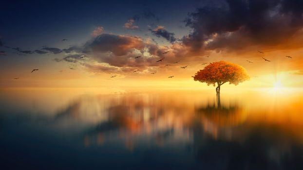 Photo free lone tree, horizon, sunset