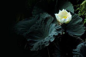 Фото бесплатно красивый цветок, цветы, цветок