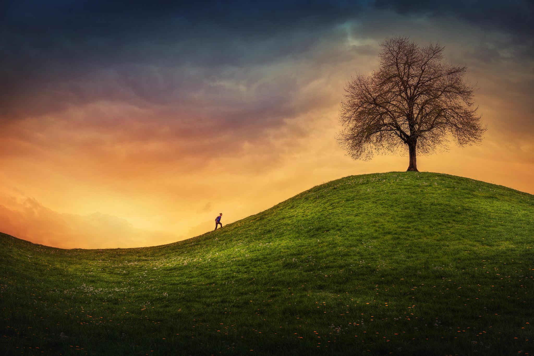обои закат, поле, холмы, дерево картинки фото