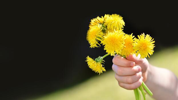 Photo free child s hand, yellow, daisy family