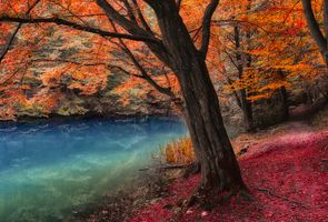 Photo free autumn, forest trees, pond