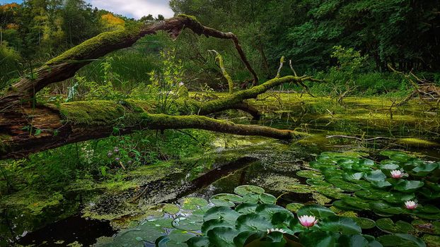Бесплатные фото водоём,озеро,болото,лес,деревья,цветы,природа