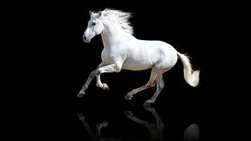 Фото бесплатно животные, лошади, белый
