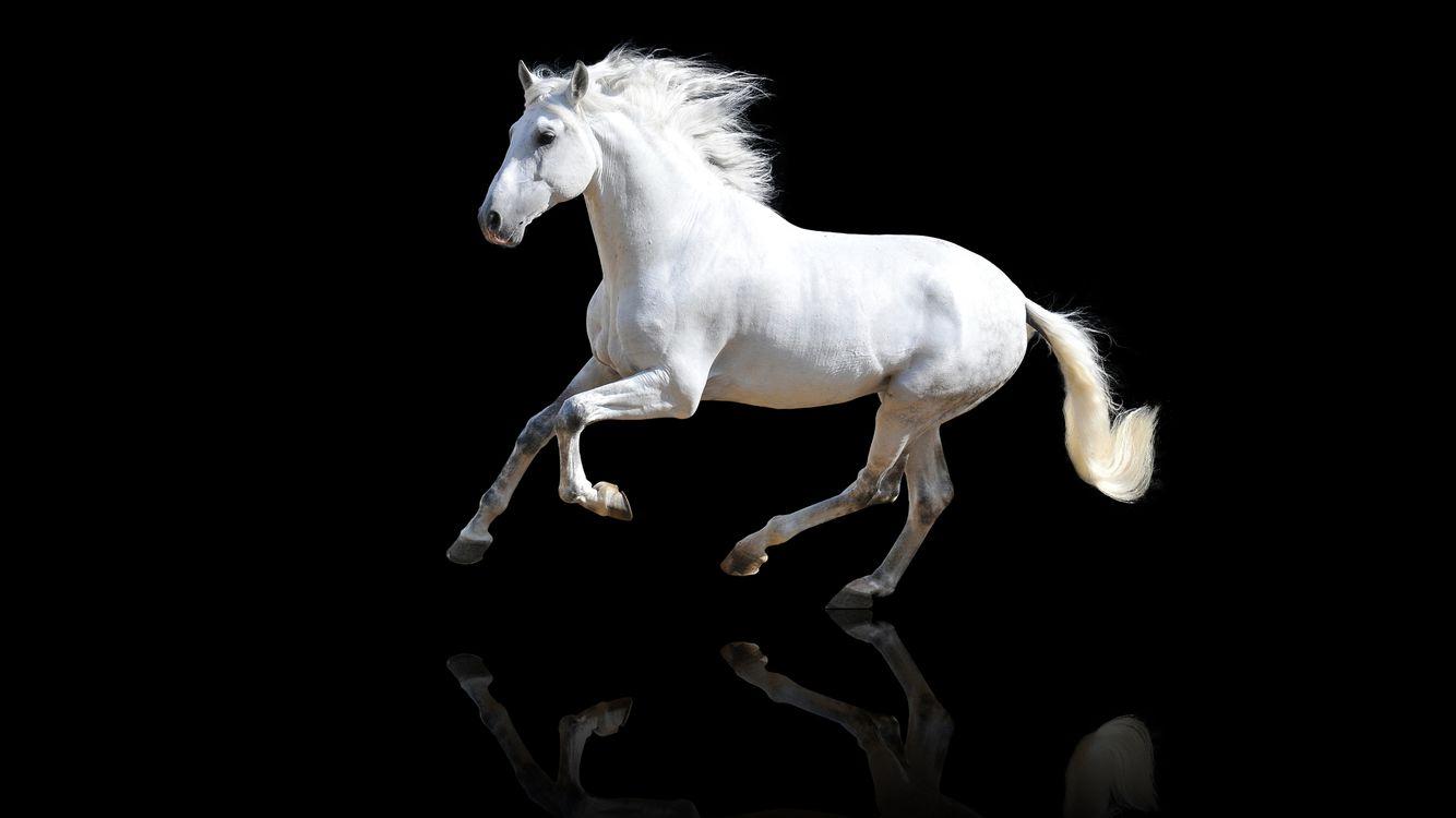 Фото животные лошади белый - бесплатные картинки на Fonwall
