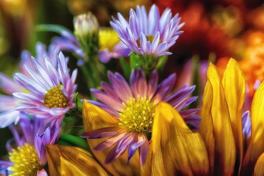 Бесплатные фото цветочная композиция,цветы,цветок,флора