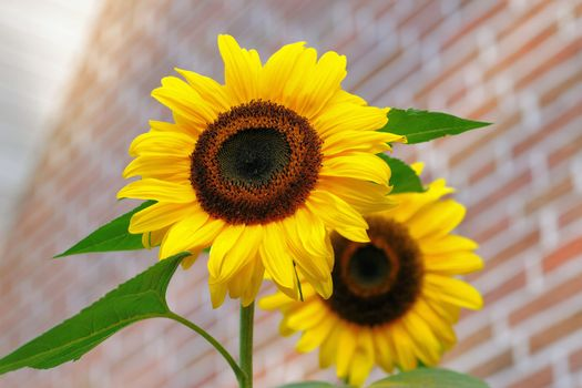 Photo free flowers, botany, summer