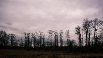 Фото бесплатно деревья, облачно, поле