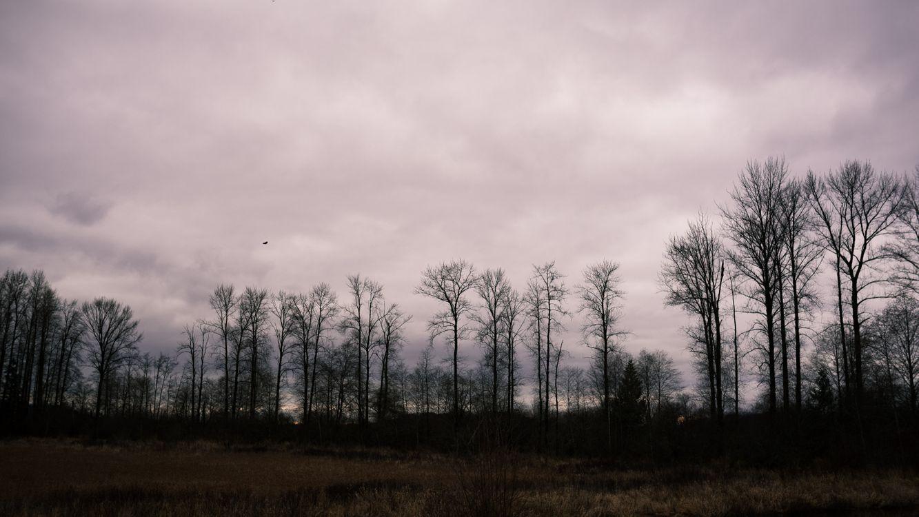 Фото бесплатно деревья, облачно, поле - на рабочий стол