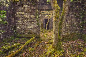 Заставки заброшенный замок,разорение,забытый,покинутый замок,помещение,мох,старый