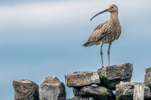 Photo free large beak, birds, stones
