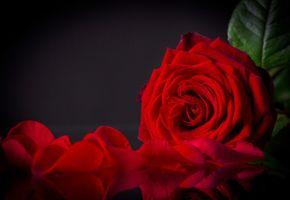 Фото бесплатно любовь, признание, праздник