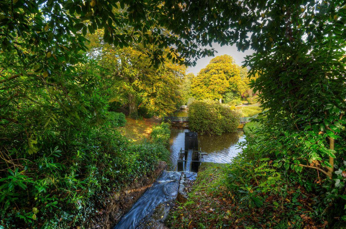 Фото бесплатно осень, парк, деревья, речка, ручей, колесо от мельницы, мост, пейзаж, пейзажи