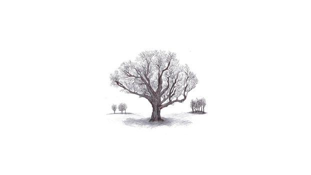 Фото бесплатно эскиз дерева, белый фон, рисунок