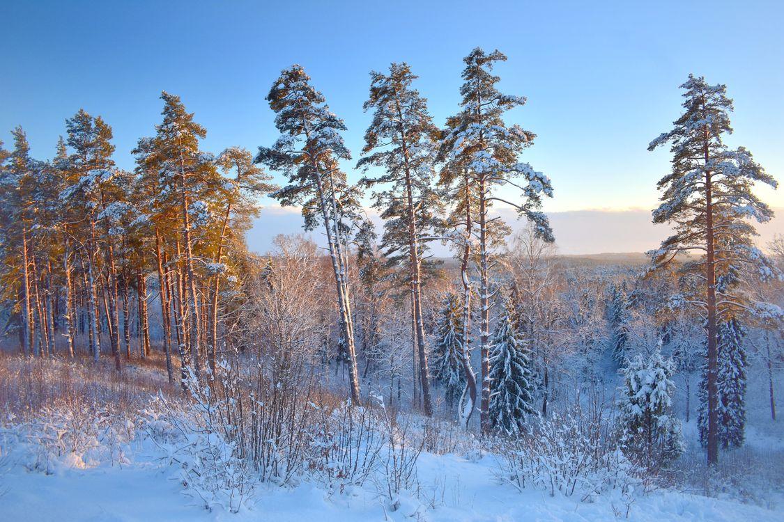 Фото бесплатно Girnikai, Lithuania, зима - на рабочий стол