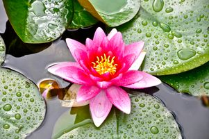 Photo free water lilies, beautiful flower, beautiful flowers