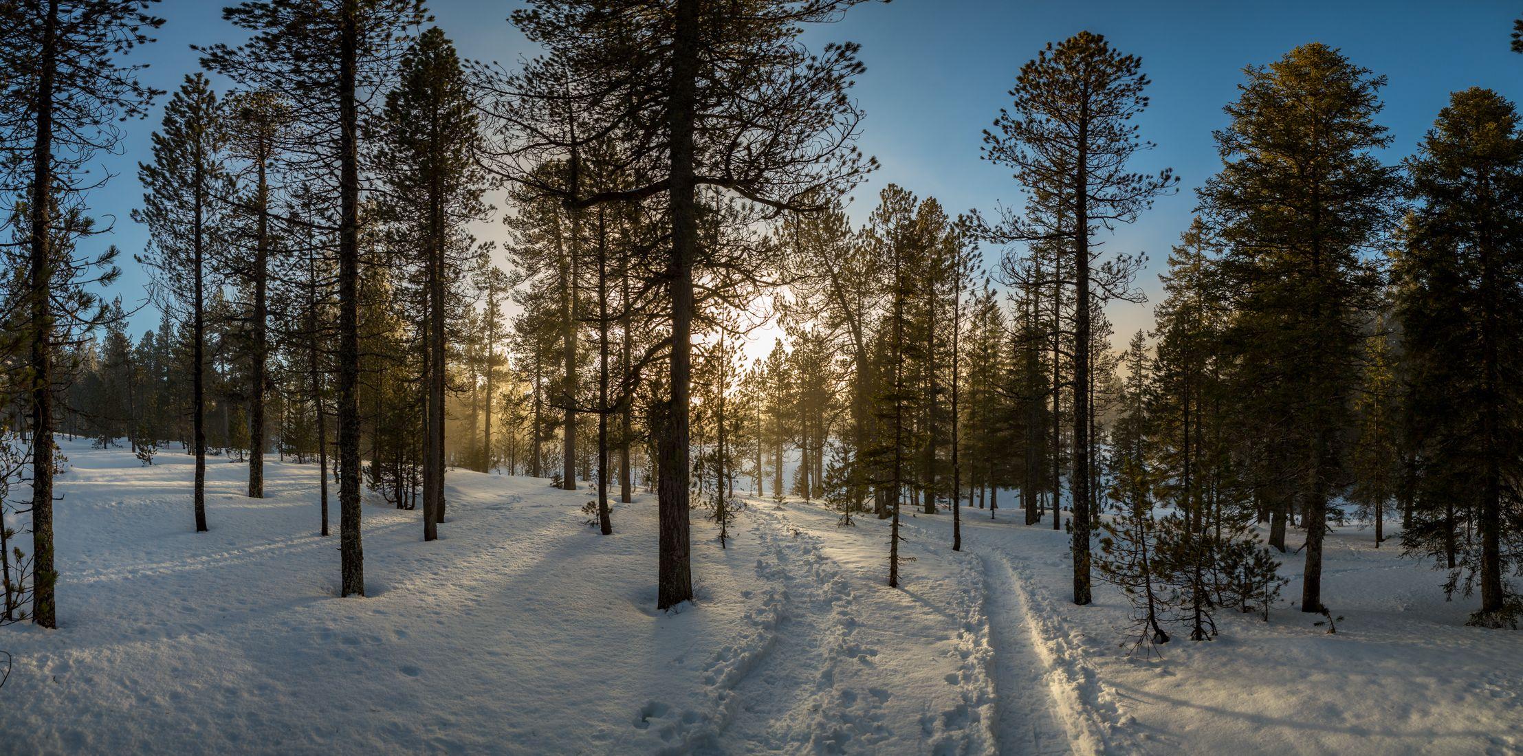 Обои закат, зима, лес, деревья