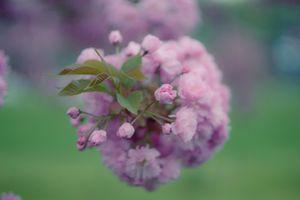 Фото бесплатно цветы, красочное, цветение