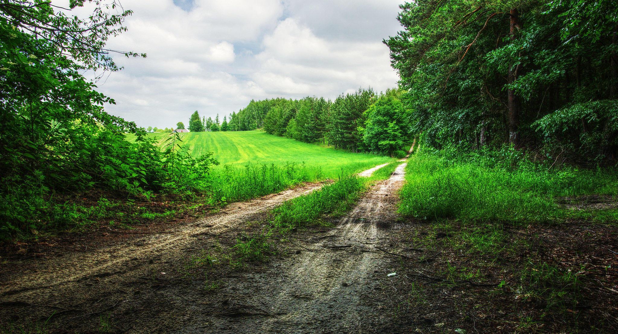Дорога в поле бесплатно