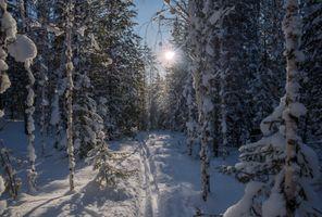 Заставки следы, лес, деревья
