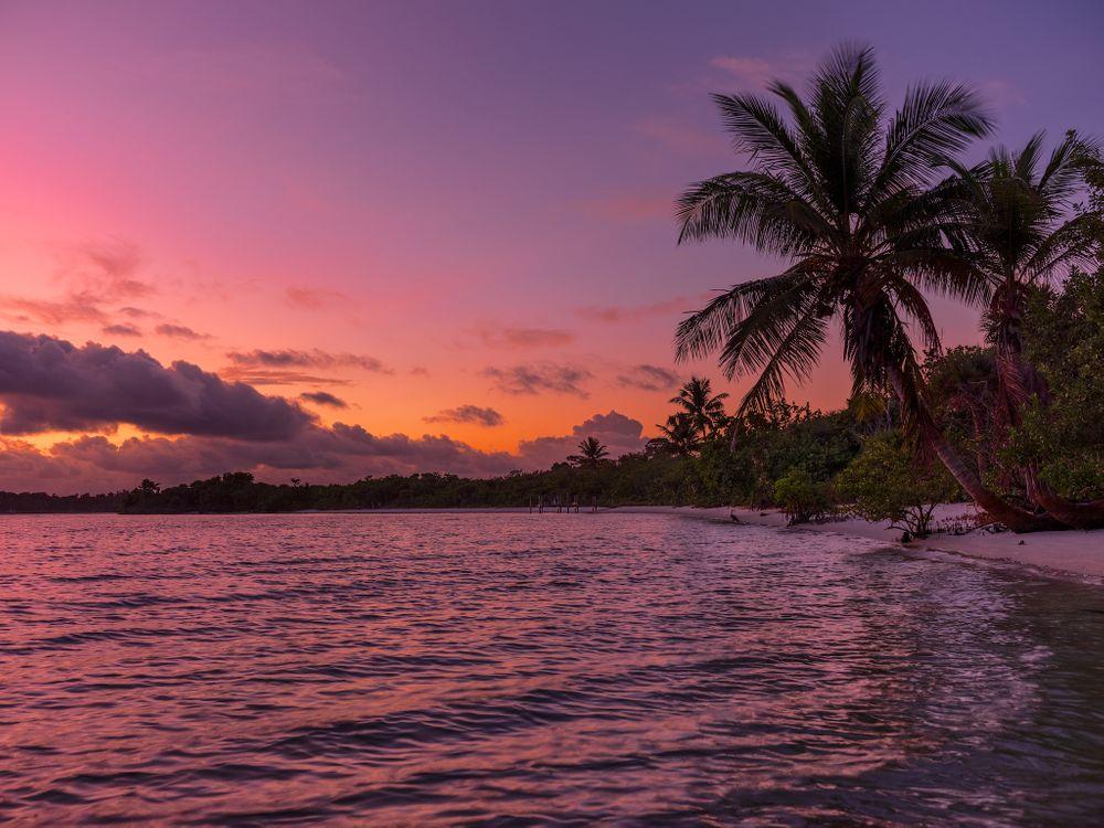Фото бесплатно пальмы, волны, природа - на рабочий стол