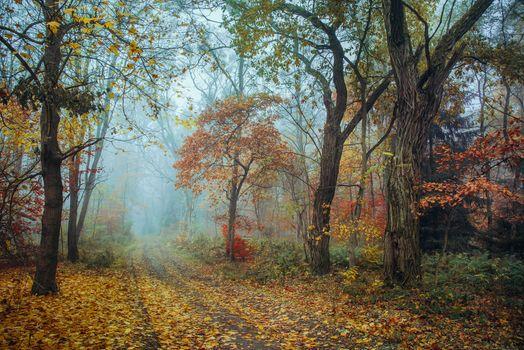 Screensaver autumn, autumn season, the road to the phone