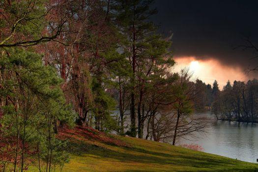 Фото Скачать деревья, лес