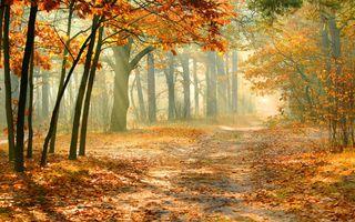 Фото бесплатно солнечный луч, тропинка, листья