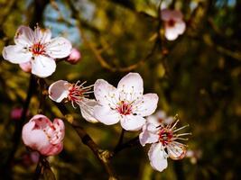 Фото бесплатно цветок, лист, сад