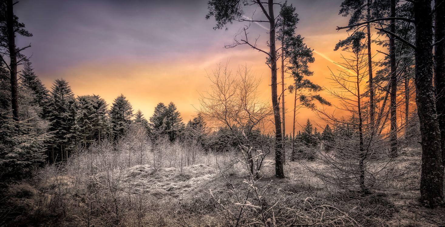 Фото бесплатно закат, лес, деревья, иней, пейзаж, пейзажи