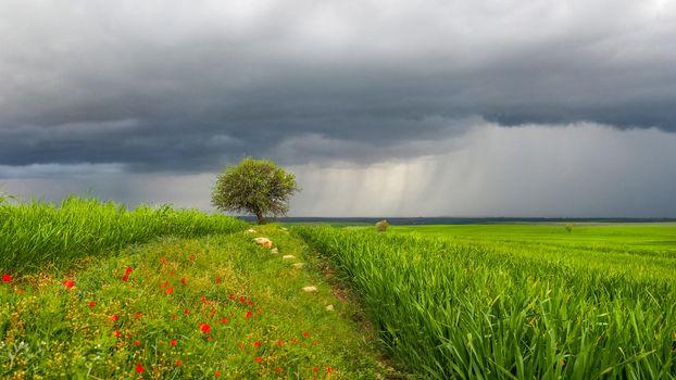 Фото бесплатно поле, дерево, тучи