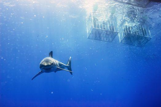 Заставки Морские обитатели, акулы, море
