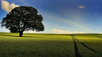 Бесплатные фото поле,колосья,дерево,небо,пейзаж