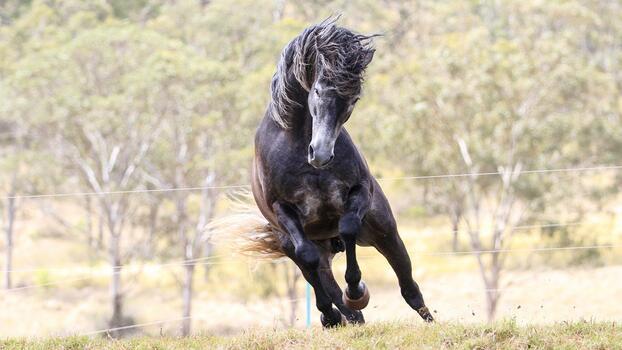 Photo free animals, horse, stallion