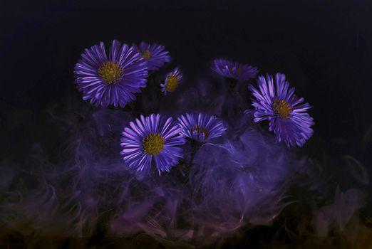 Фото бесплатно астры, цветы, макро