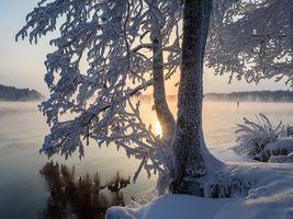 Фото бесплатно Савонлинна, деревья, Финляндия