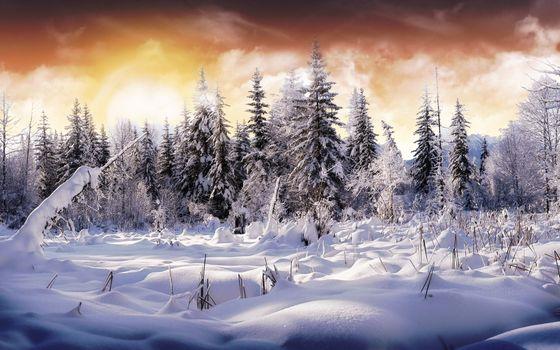 Фото бесплатно дерево, солнечный свет, утро