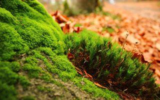 Фото бесплатно зеленый, макрос, мох