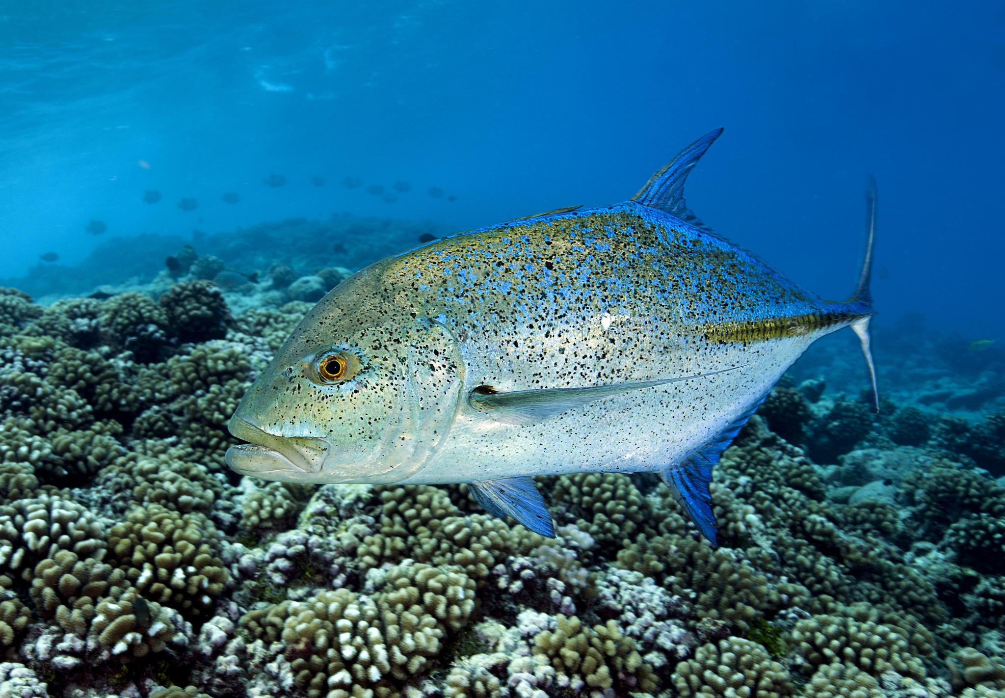 Обои Морские обитатели, морское дно, рыба, море
