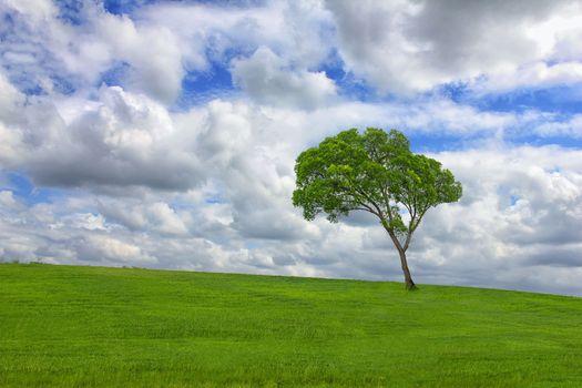 Фото бесплатно облака, одинокое дерево, поле
