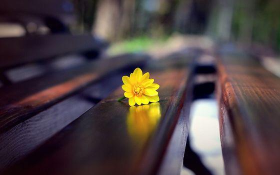 Photo free bench, yellow flower, boke