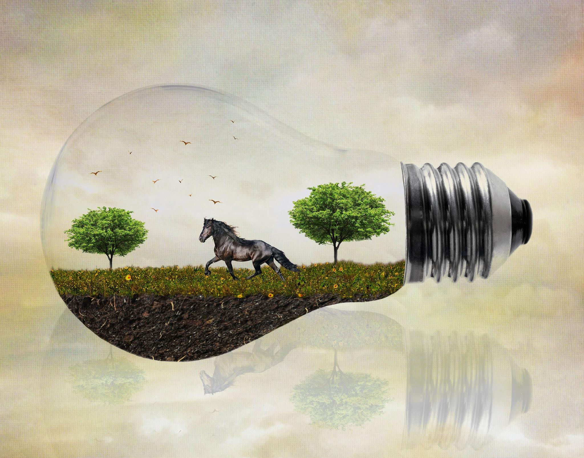 Обои лампочка, поле, лошадь, деревья
