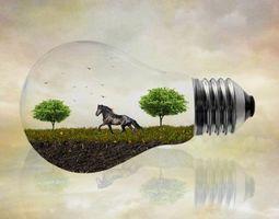 Фото бесплатно лампочка, поле, лошадь