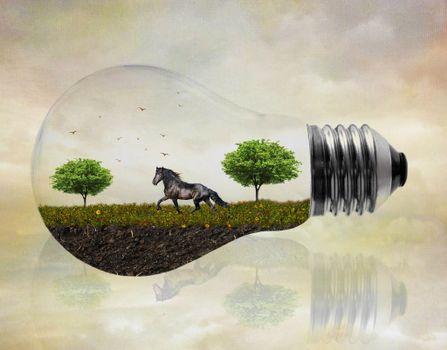 Заставки лампочка, поле, лошадь