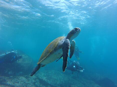 Фото бесплатно биология, море, океан