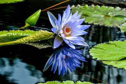 Photo free pond, beautiful flower, water lilies