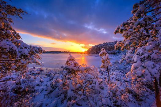 Photo free lake, new Jersey Pinelands, sunset